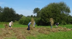 volunteers-stacking-hay-on-the-green