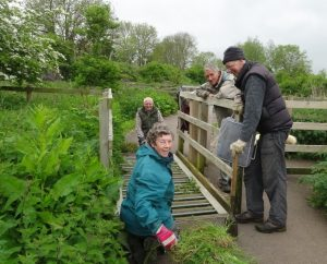2016-may-25-cheery-volunteers-clear-weeds-from-the-cattle-grids