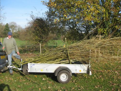109. 2011 November Willow for planting