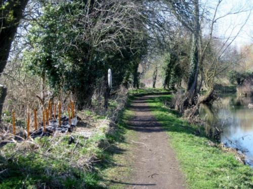 138. 2012 March New Reach towpath and hedge