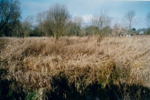 54. 2005 Spring ditch to be dredged in Folly mneadow