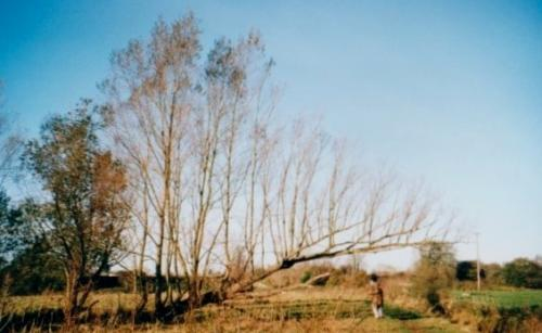 6.1999 Blyth meadow fallen willow