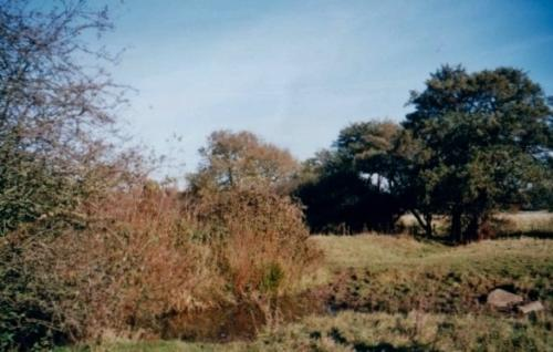 9.1999 Blyth meadow pond